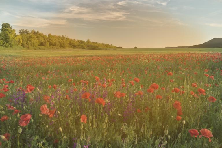 spring-flowers-in-meadow-DFUNZPZ-distored2